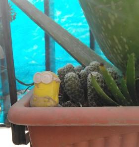 companions to cacti