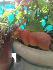 live planters
