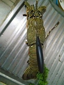 cutting and splitting a lobster tail