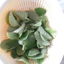 Carom Leaves / Ajwain ke Pattte